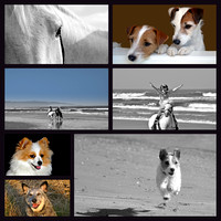 Dog & Horse Collage 2
