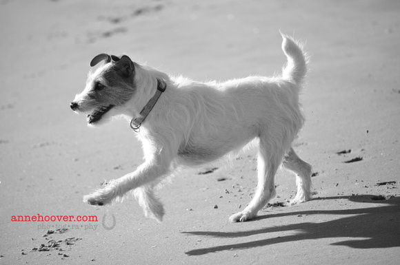 Dogs at the Beach 2011-01-37